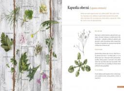 Ukázka z knihy Kytky k jídlu v receptech i herbáři