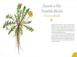 Ukázka z knihy Pampelišky k jídlu